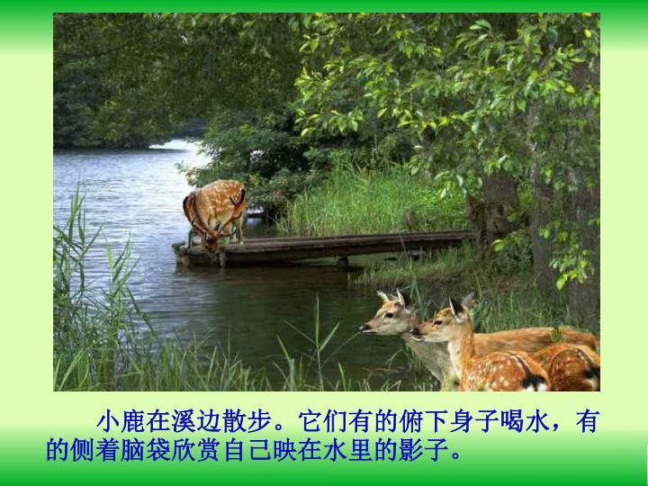 小鹿在溪边散步。它们有的俯下身子喝水,有的侧着脑袋欣赏自己映在水里的影子。