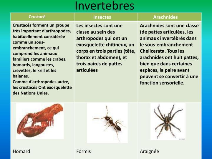 Invertebres