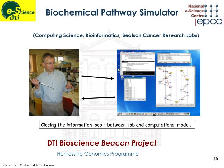 Biochemical Pathway Simulator