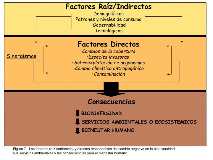 Factores Raíz/Indirectos