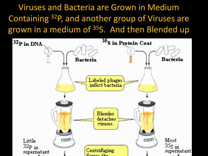 Viruses and Bacteria are Grown in Medium Containing