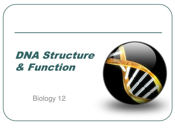 Dna structure function