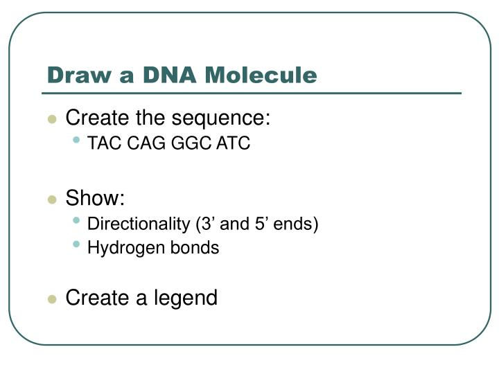 Draw a DNA Molecule