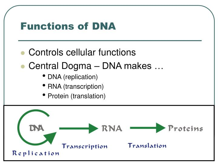 Functions of dna