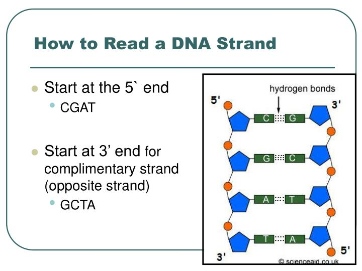 How to Read a DNA Strand