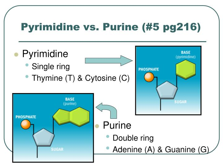 Pyrimidine