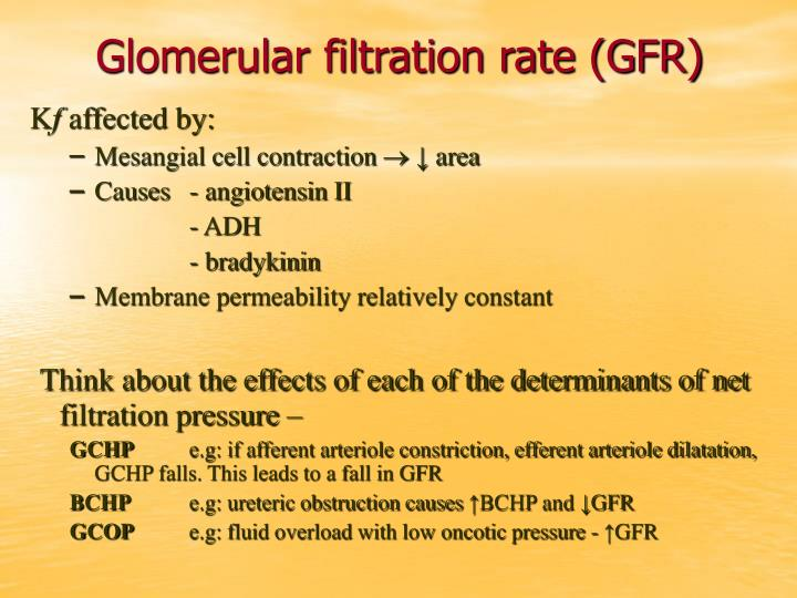 Glomerular filtration rate (GFR)