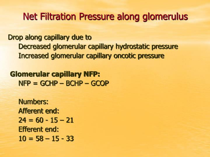 Net Filtration Pressure along glomerulus