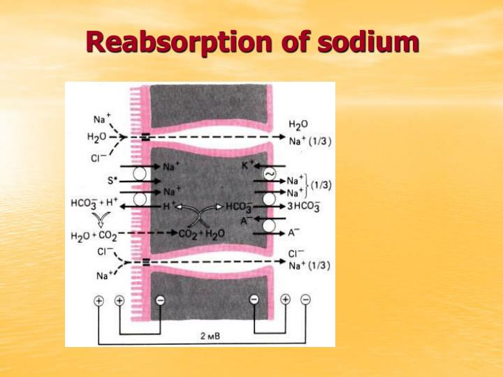 Reabsorption of sodium