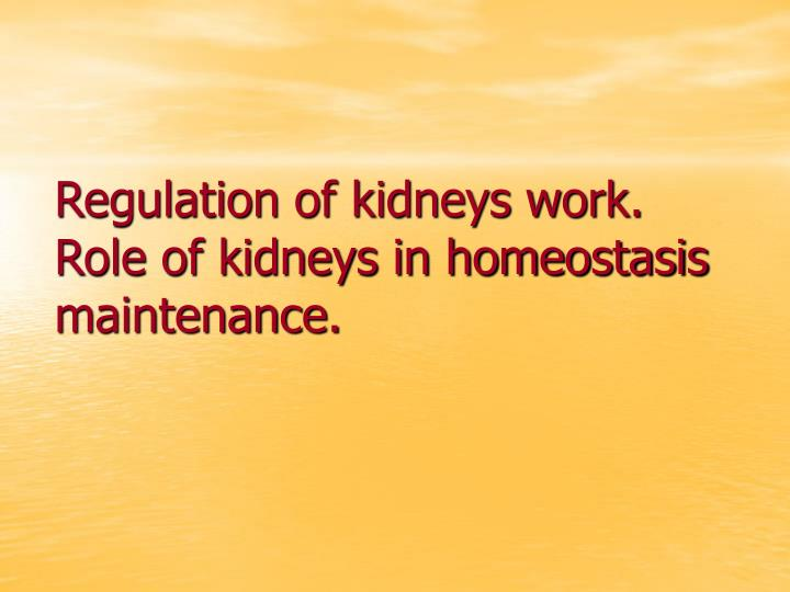 Regulation of kidneys work role of kidneys in homeostasis maintenance