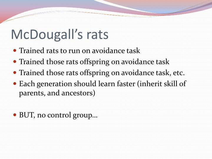 McDougall's rats