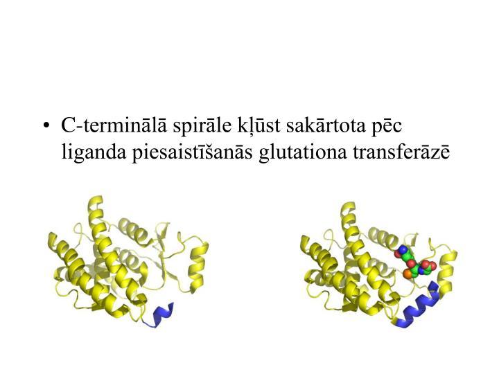 C-terminālā spirāle kļūst sakārtota pēc liganda piesaistīšanās glutationa transferāzē