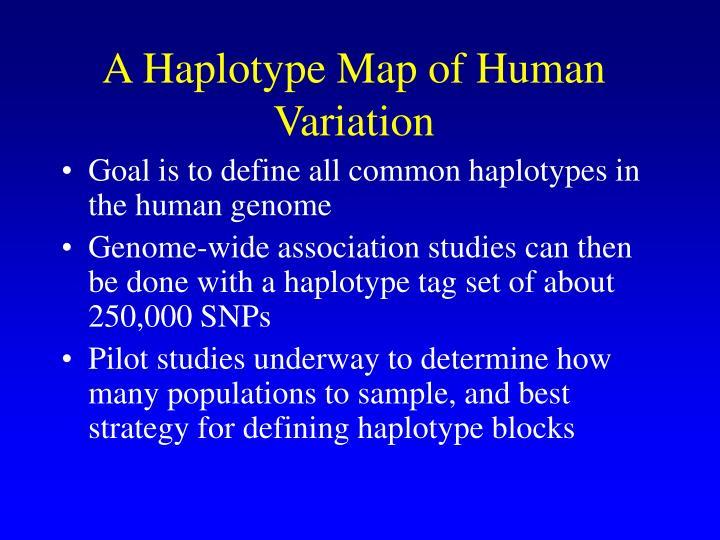 A Haplotype Map of Human Variation