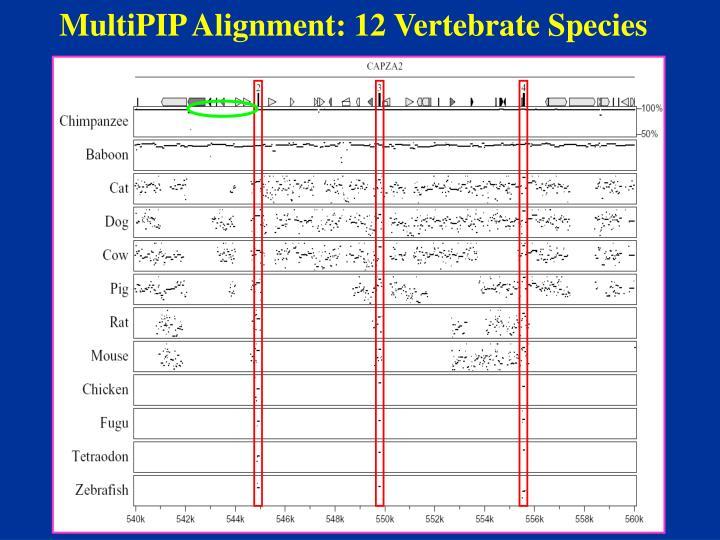 MultiPIP Alignment: 12 Vertebrate Species
