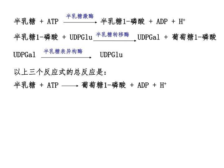 半乳糖激酶