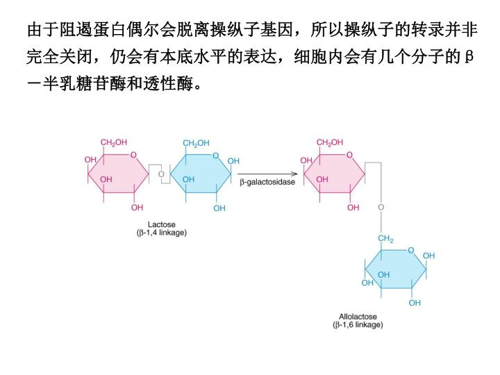由于阻遏蛋白偶尔会脱离操纵子基因,所以操纵子的转录并非完全关闭,仍会有本底水平的表达,细胞内会有几个分子的