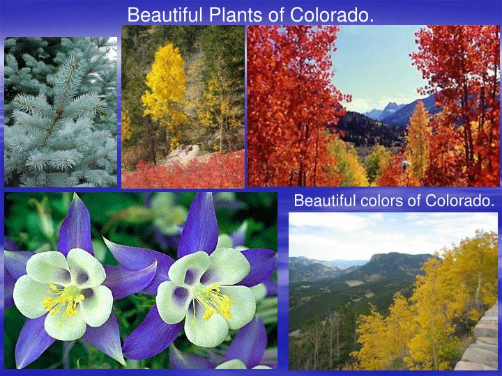 Beautiful Plants of Colorado.