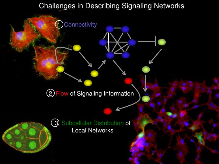 Challenges in Describing Signaling Networks