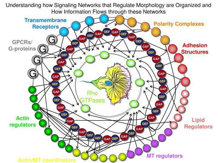 Transmembrane Receptors