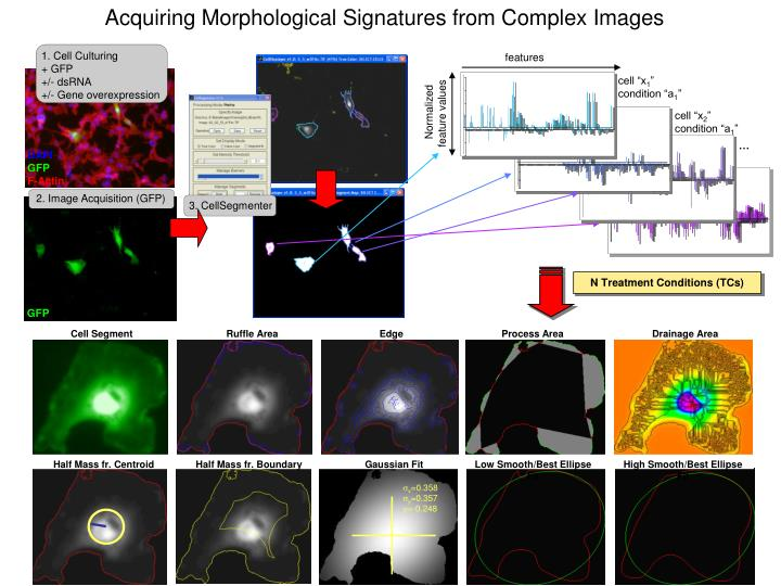 Acquiring Morphological Signatures from Complex Images