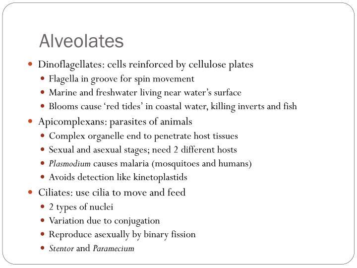 Alveolates