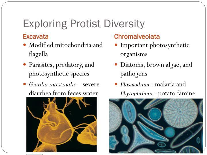 Exploring Protist Diversity