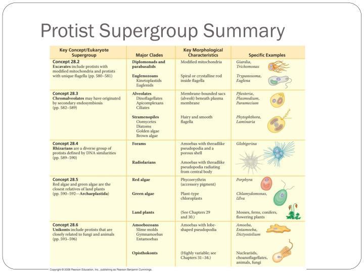 Protist Supergroup Summary