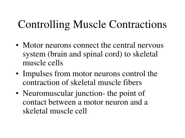 Controlling Muscle Contractions