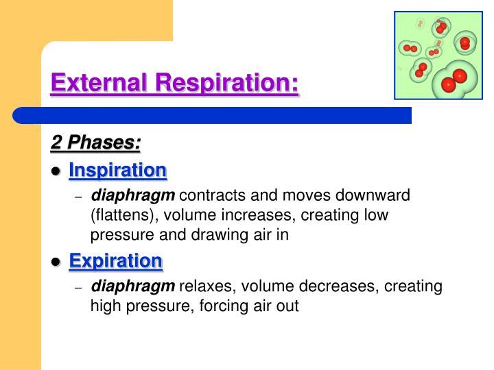External Respiration: