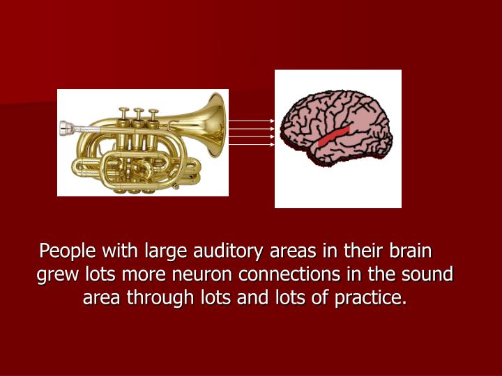 People with large auditory areas in their brain grew lots more neuron connections in the sound area through lots and lots of practice.