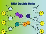 dna double helix1