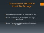 characteristics of 400k of pouch rat damage