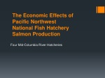 the economic effects of pacific northwest national fish hatchery salmon production