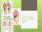 human body system project