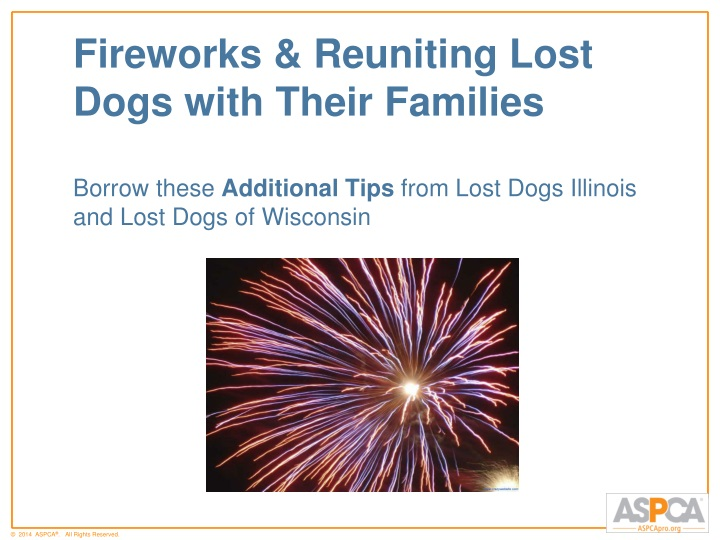 Fireworks & Reuniting Lost Dogs with Their