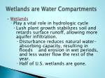 wetlands are water compartments