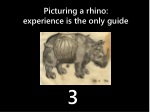 picturing a rhino experience is the only guide