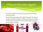 what are the main organs