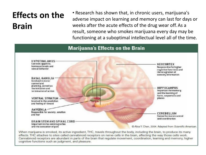 Effects on the Brain