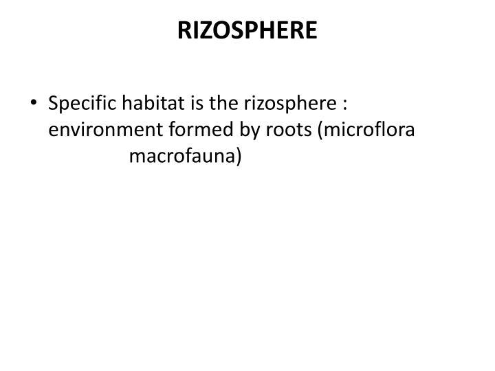 RIZOSPHERE