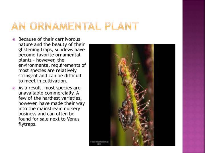 An ornamental plant
