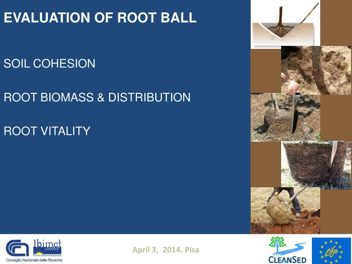 EVALUATION OF ROOT BALL