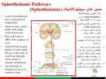 spinothalamic