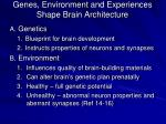 genes environment and experiences shape brain architecture