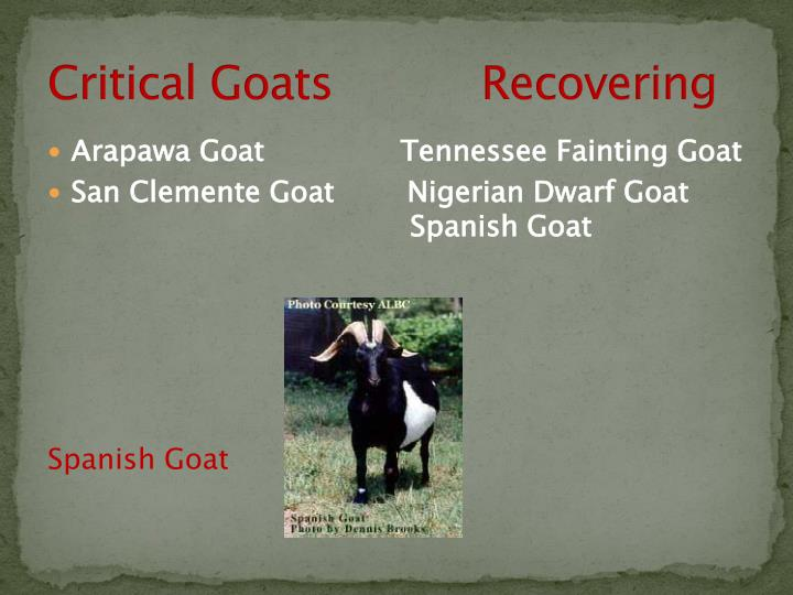 Critical Goats           Recovering