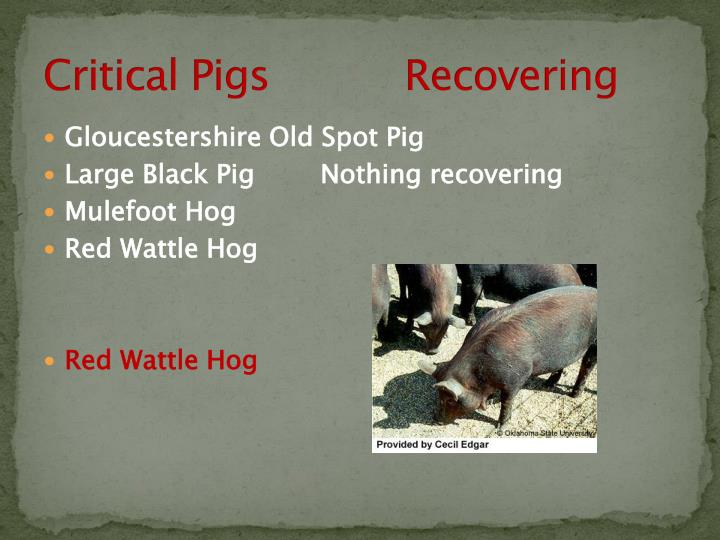 Critical Pigs           Recovering