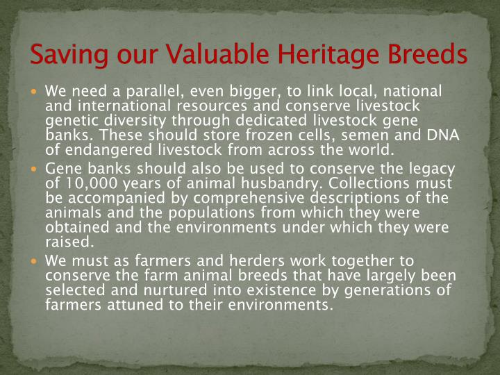 Saving our Valuable Heritage Breeds