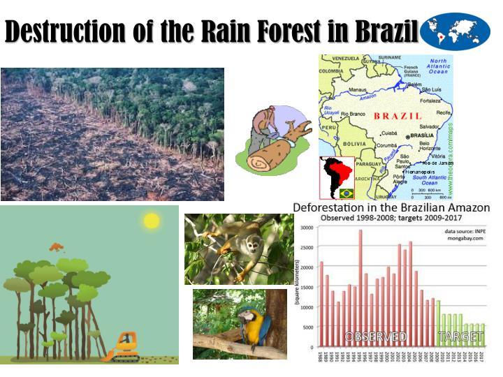 the destruction of the rainforest in brazil