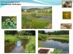 wetlands establishment stormwater wetlands