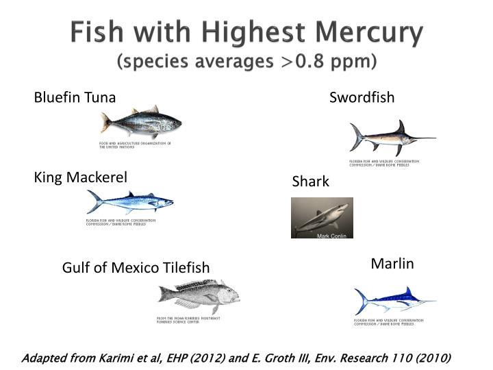 Fish with Highest Mercury